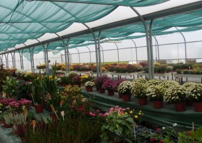 Paradis des Plantes - Pons