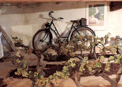 Les Ormeaux - pineau - cognac - Musée vigneron07